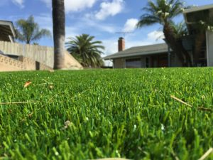 front-yard-perspective-